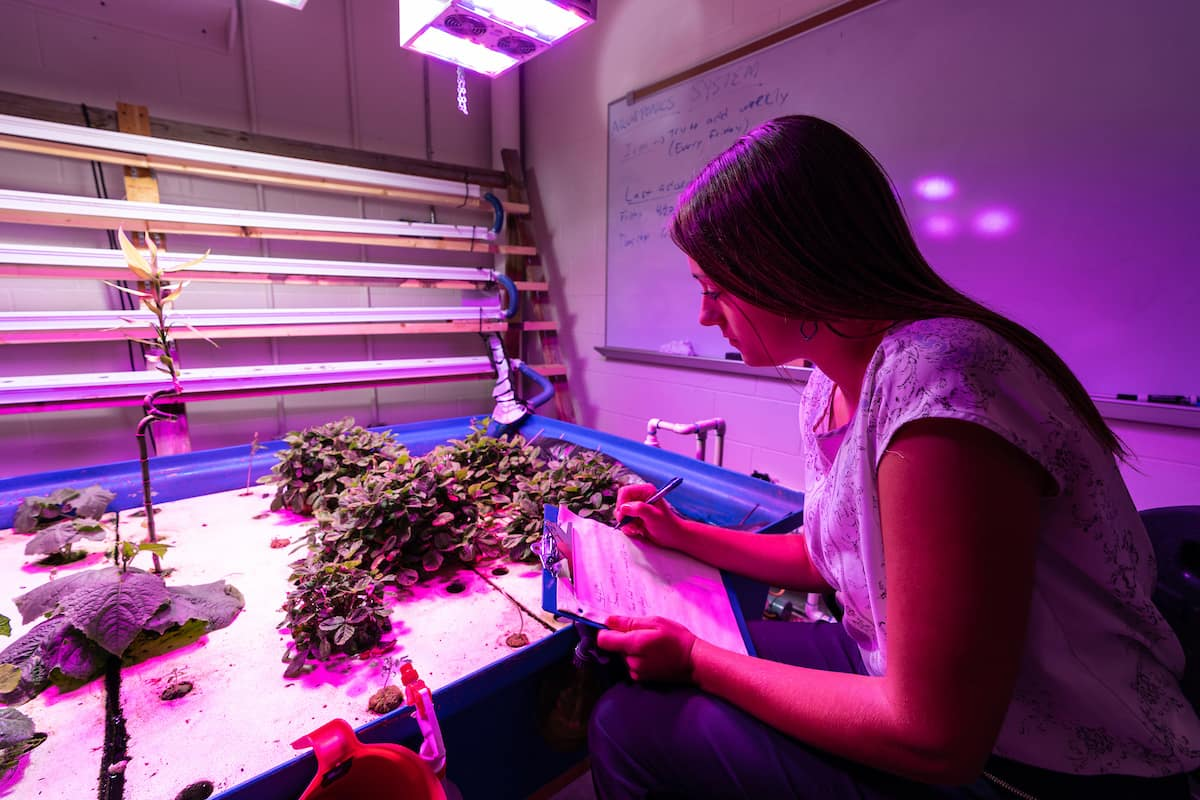 A student works with aquaponic equipment to grow plants.